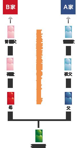 2系統家系図